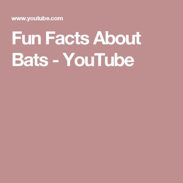 Fun Facts About Bats - YouTube