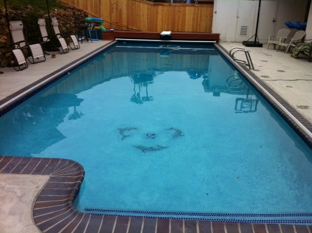 27 500 Gallons Of Swimming Pool Water Recycled Rather Than Drained Pools We 39 Ve Recycled