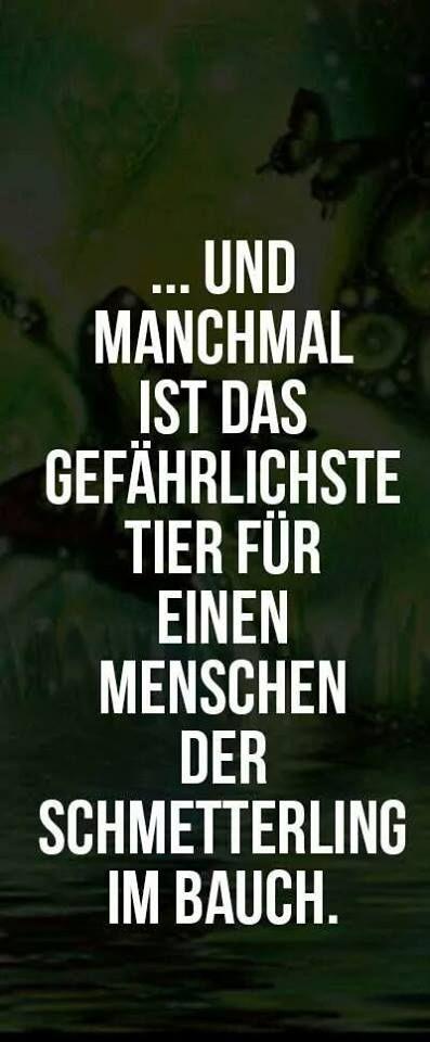 ... und manchmal ist das gefährlichste Tier für einen Menschen der Schmetterling im Bauch.