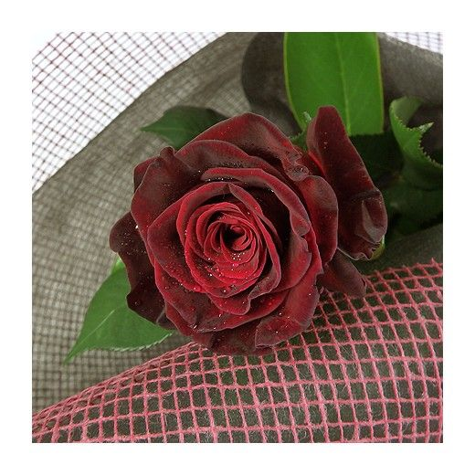 Valentine's Day single Red Rose - Auckland Only