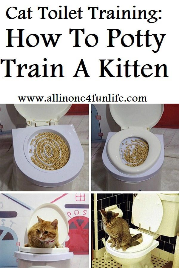 Cat Toilet Training How To Potty Train A Kitten Training A Kitten Cat Toilet Training Cat Toilet
