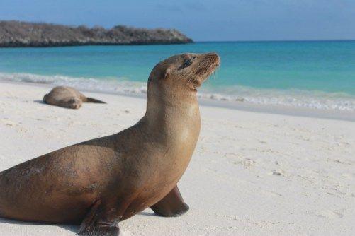 Interview / Wonen op de Galapagos eilanden | Trends 4 Travel