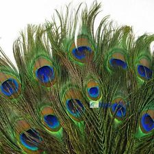 50pcs lots Real Natural Peacock Tail Eyes Feathers 8-12 Inches about 23-30cm BS