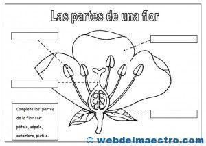 Partes de una flor-2