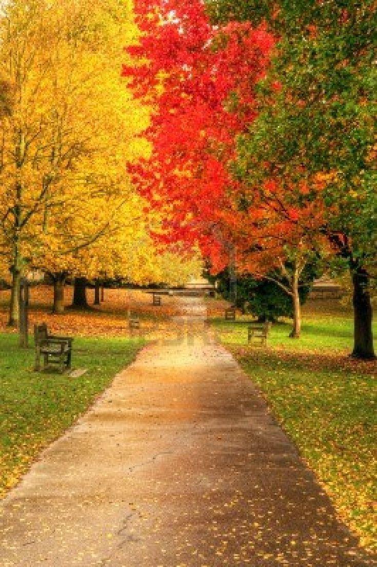 Caída de otoño hermoso bosque