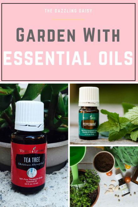 How to garden with essential oils. Essential Oils, Gardening, Essential Oil Uses, Garden Pest Control, DIY Pest Control