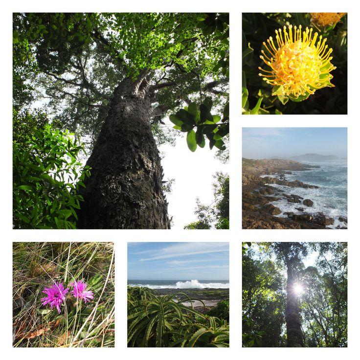 Explorons en famille la Garden Route dans la province du Cap- Occidental, à travers 10 activités eco-friendly adaptées aux enfants.   One Footprint On The World