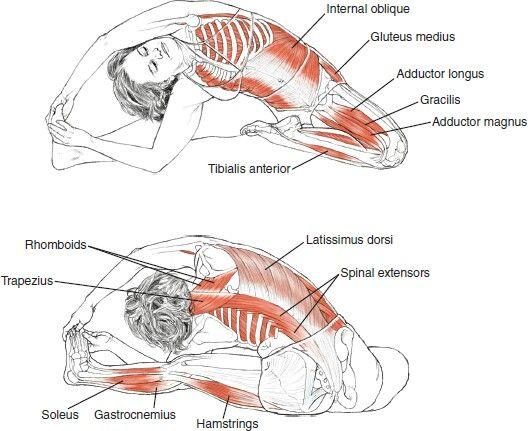 Anatomia do alongamento