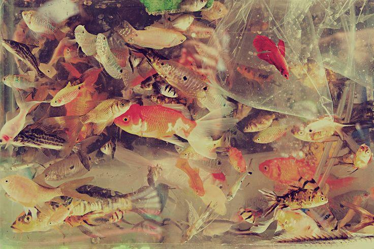 La hora de los peces. www.junejuno.com