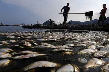 Lake That Will Serve As A 2016 Olympic Rowing Venue Is Full Of Dead Fish