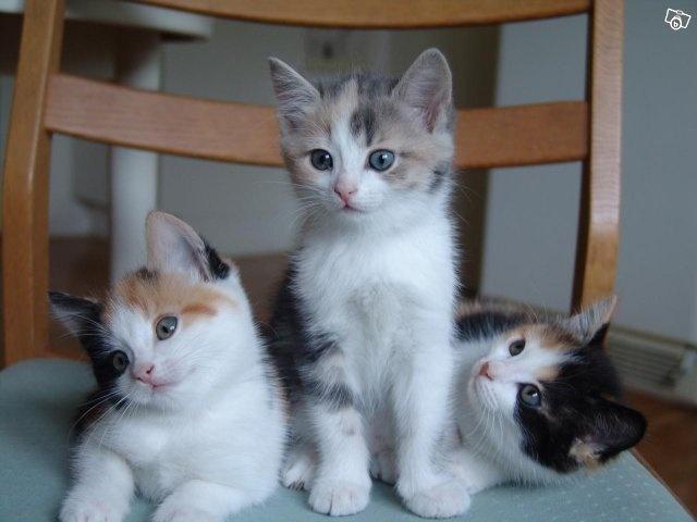 3 jättesöta och gosiga kattungar