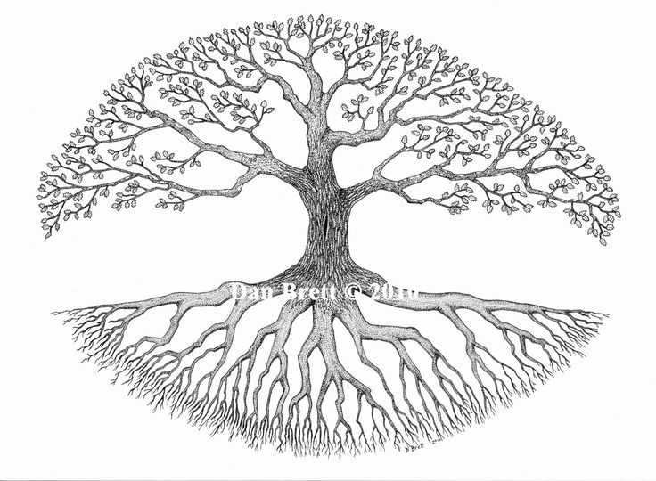 Oak Tree With Roots Drawing | www.pixshark.com - Images ...