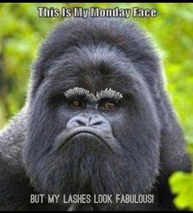 Haha!! Monday funny!!! Gotta try the 3D mascara!!!! link is in my bio:) #3Dmascara #lovemylashes #beyouniquebylanie