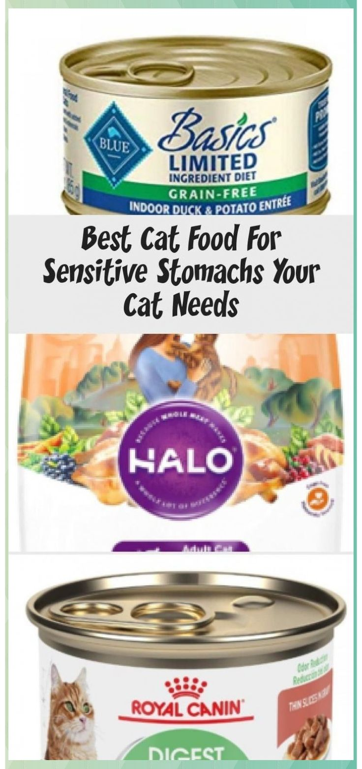 Best cat food for sensitive stomachs your cat needs in the
