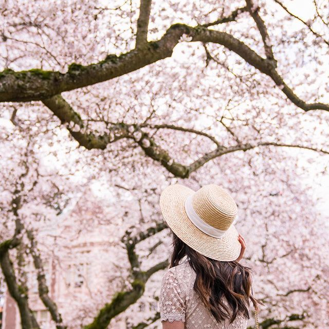 Our Small Condo Remodel Reveal Just A Tina Bit Spring Photography Spring Pictures Cherry Blossom