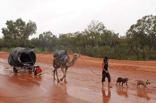Four men, two dogs and three camels set out to explore Broome and its surrounds in the changeable wet season.