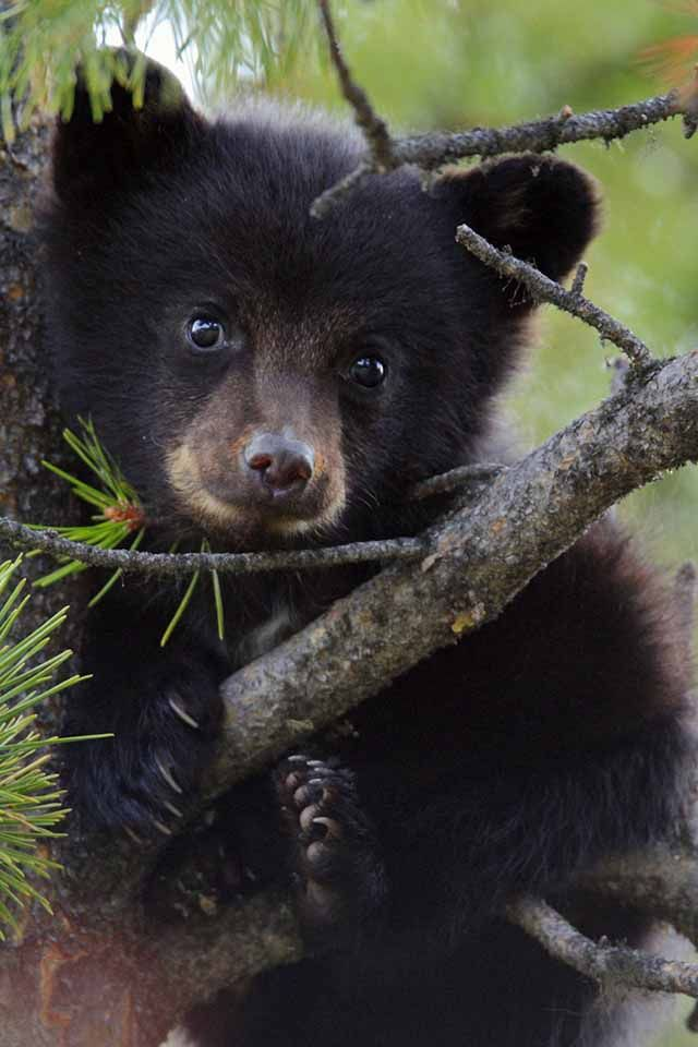 baby bear They are the cutest little buggers