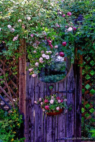 pretty purple garden gate with climbing roses