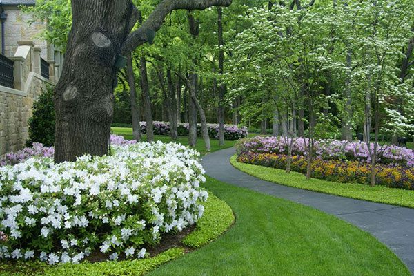The striking beauties bordering the trees and the pathway are azaleas. In this photo, the pink are George Taber Azalea and the white ones are GG Gerbing Azalea.