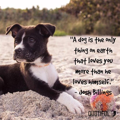 26 Best Furry Friends Quotes Images On Pinterest