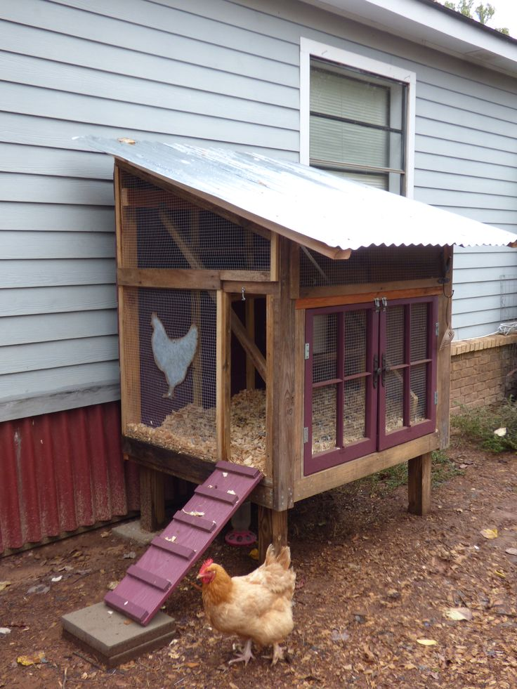 "This month's ""Cool Coop"" is a great example of a doable DIY project. With some basic carpentry skills and determination, I think a lot of our readers could tackle this construction and create an equally functional and attractive coop. Our featured chicken keeper, Vicky of Texas, built this ""Rustic / Whimsical Coop"" out of re-purposed, left-over, donated …"
