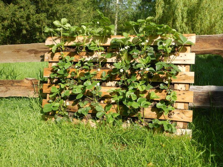 bepflanzter zaun aus euro paletten gr nzeuch pinterest erdbeeren suche und google. Black Bedroom Furniture Sets. Home Design Ideas