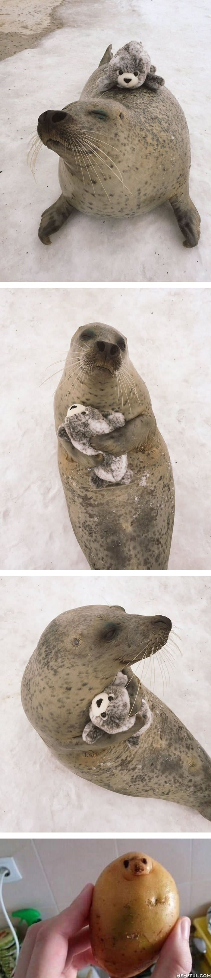 Seal spends his days cuddling a tiny toy version of himself