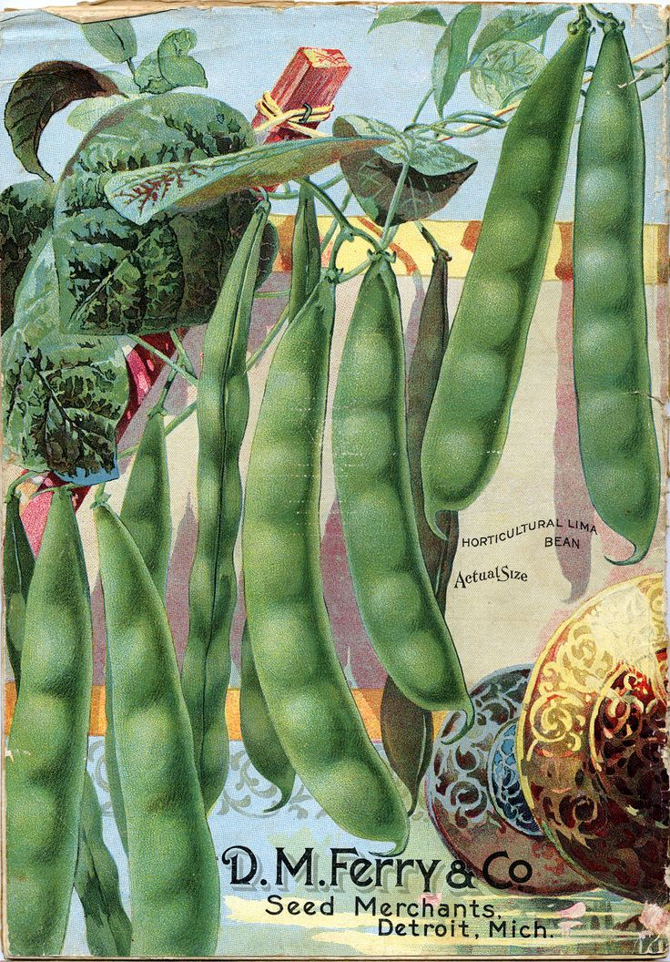 D.M. Ferry & Co. pea seeds