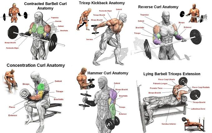 Best Arm Workout For Mass