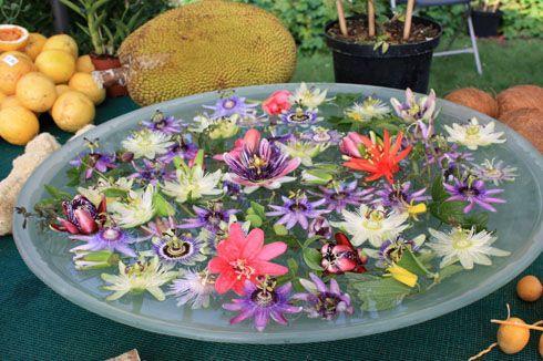 fleurs-comestibles liste et qqs infos de 42 fleurs