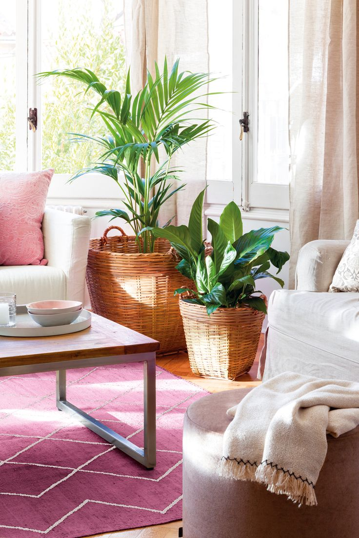 Plantas dentro de casa, junto a sofá, con macetas de fibra y alfombra fúcsia 00436619