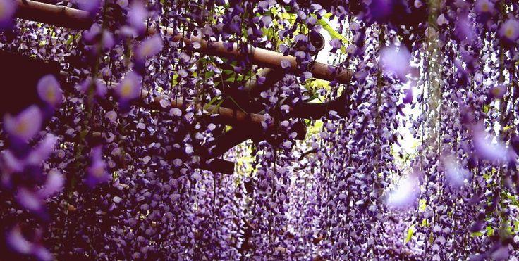 Pnącza | Floral