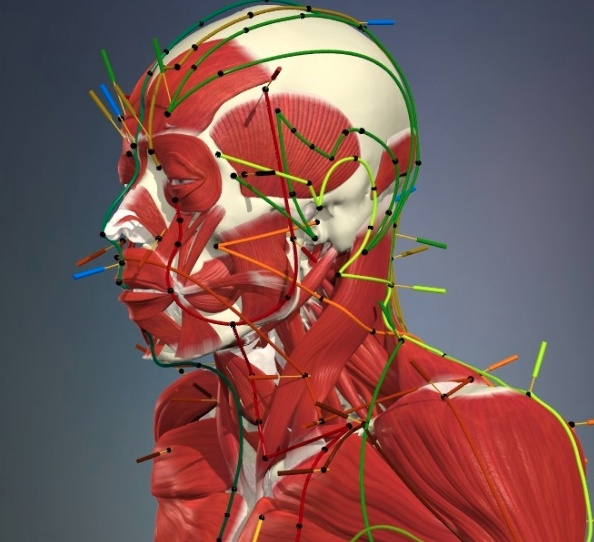 Anatomy.tv for Acupuncture is a detailed and interactive 3D anatomy  resource aimed at both