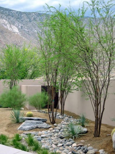 Rock lawns are very interesting, modern and attractive in desert landscaping. You can use  river rocks and try to make dry riverbeds for more interest.