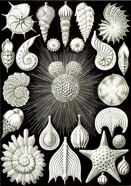 Free art nouveau coloring page - Ernst Haeckel was a german biologist…