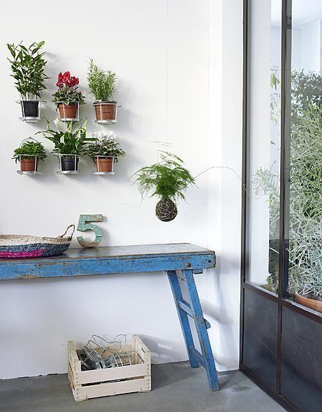 Als foto's, boeken en kunst aan de wand kunnen hangen, dan kunnen planten dat ook.
