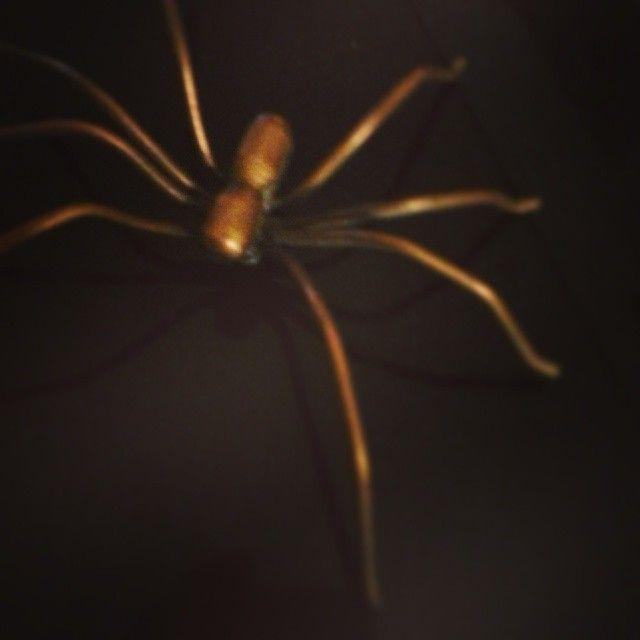 Copper Spider #03 by Malafola- #malafola #copper #spider #copperart #art #artisan #giftideas #christmasgiftideas #christmas #artigianato #scultura #sculpture #insect #naturamorta #natale #nature #insetto #ragno #creatività #homesweethome #homedecor #walldecor #decorideas