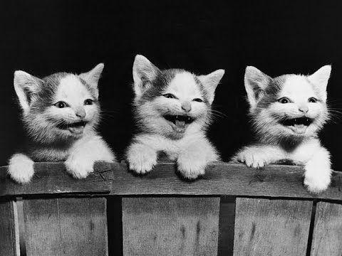 Смешные кошки 13 ● Милые котята и забавные кошки. Смешно и весело! :)))