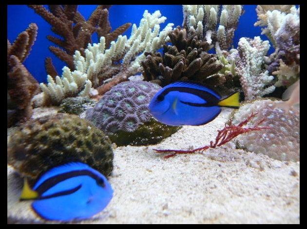 Aquarium Nouméa (Nouvelle Calédonie) Version Voyages, www.versionvoyages.fr