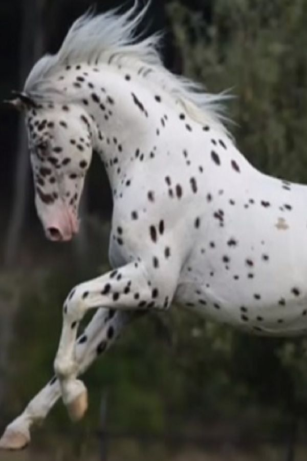 10 Most Beautiful Horse Breeds In The World Video Most Beautiful
