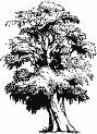 Tree E-82