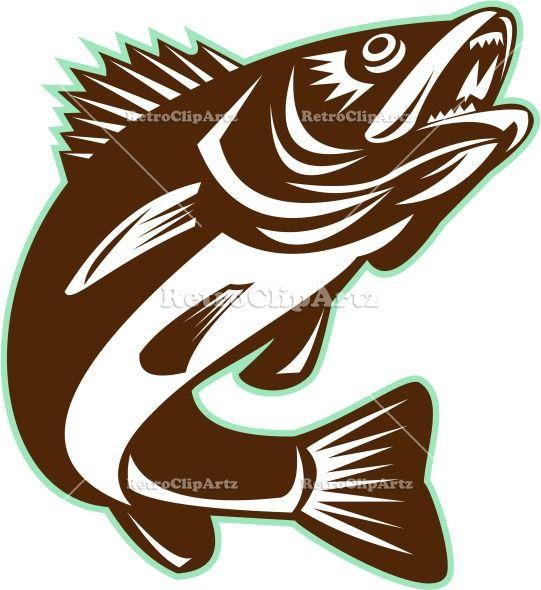 Walleye Fish Jumping Isolated Retro Vector Stock Illustration Of A Sander Vitreus