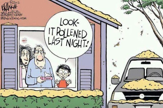 Funny Quotes About Allergies: Pinterest