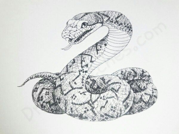 How to Draw A Snake: In A Few Easy Steps with Pictures
