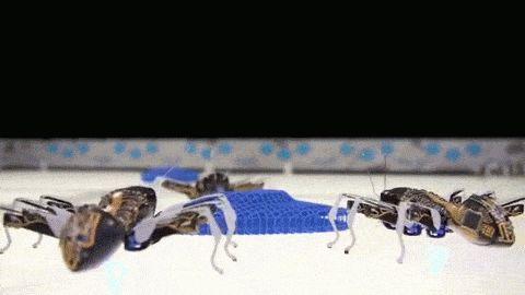 Diese deutschen bionischen Ameisen sind die solidarischsten aller Fabrikarbeiter | Motherboard