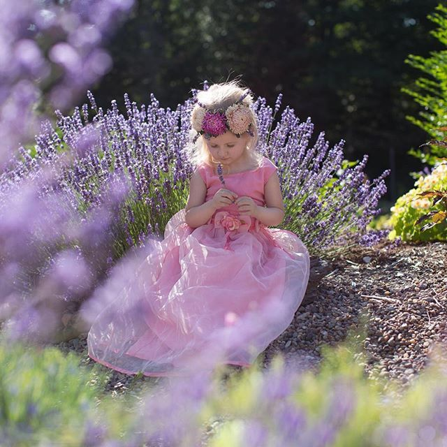 It's a #dreamy #lavender kind of #monday. #photography #familyphotographer #novascotia #halifaxphotographer #photooftheday