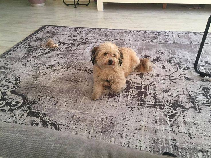 38 besten teppiche bilder auf pinterest teppiche grau. Black Bedroom Furniture Sets. Home Design Ideas