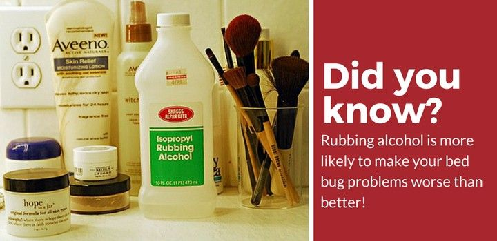 Does Rubbing Alcohol Kill Bed Bugs Possibly Click To Learn