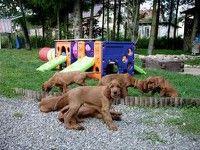 Honden-speeltuin?