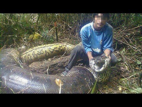Amazing Fishing Stories Snakes Vs Fisherman Youtube Giant Animals World Biggest Snake Largest Snake